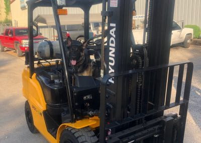 Hyundai Fork lift Lift Truck with Dog in Passenger seat
